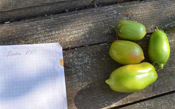 Зеленые помидоры Рома ВФ