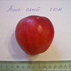 Яблоня анис