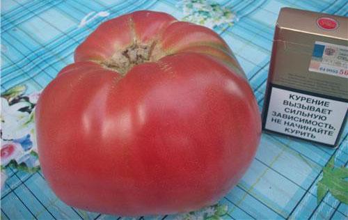 томат Бабаушкин секрет - фото спелого помидора