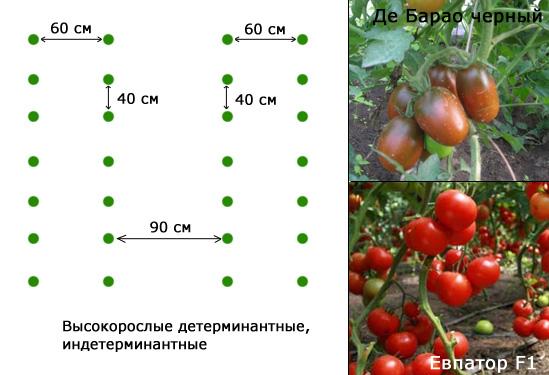 Посадка томатов в теплице - схема