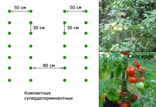Посадка помидоров в теплицу - схема