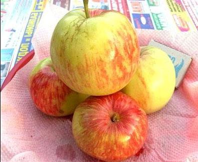 Яблоня «Орлинка» - описание сорта, фото, отзывы садоводов Посадка и уход